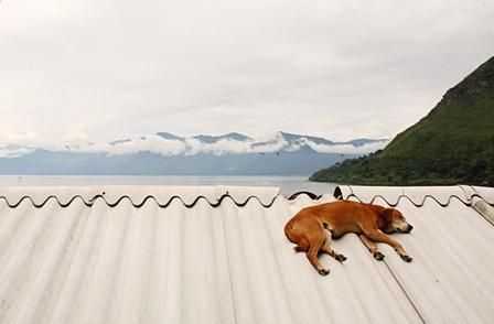 Dog on Roof