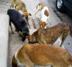 street feed