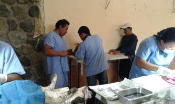 The surgical team: Dr. Isael, Dra. Kimberly, Kike, Juan, and volunteer Gregorio