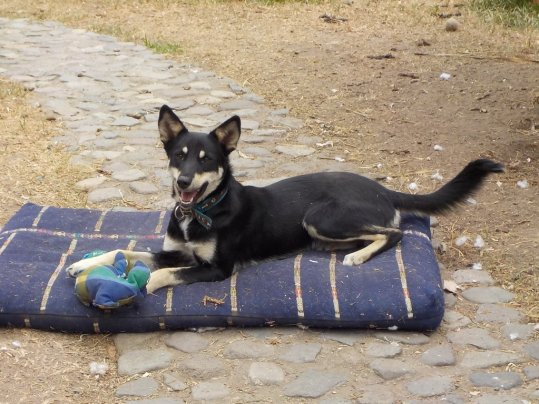 """""""Sassy"""" quiere irse a casa! :: """"Sassy"""" wants to go home!"""