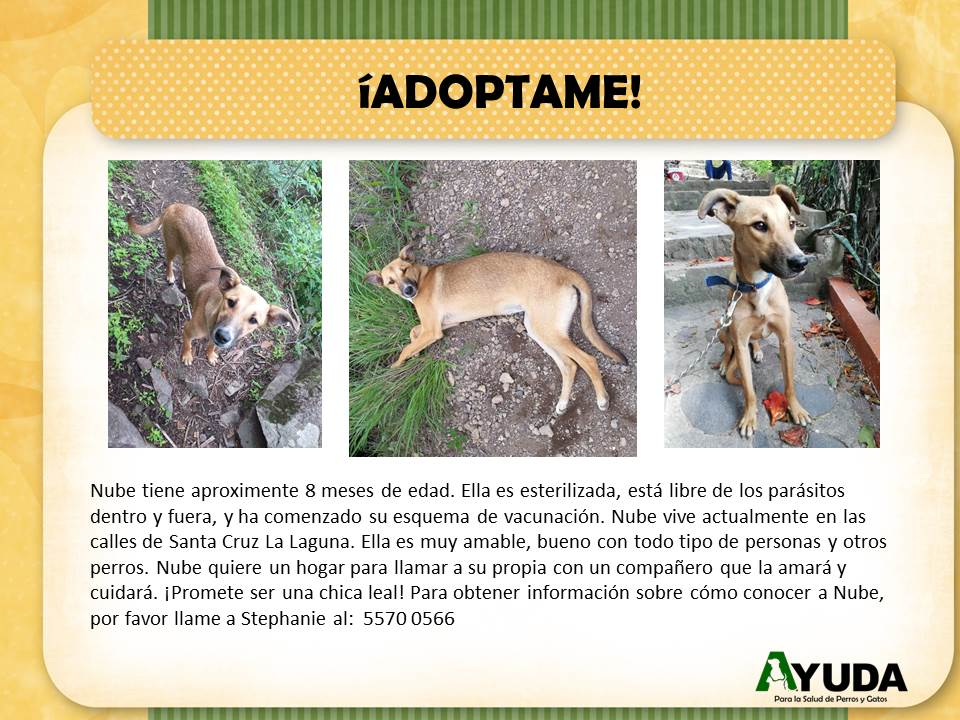 Ad.Adoption.Nube.Aug2019