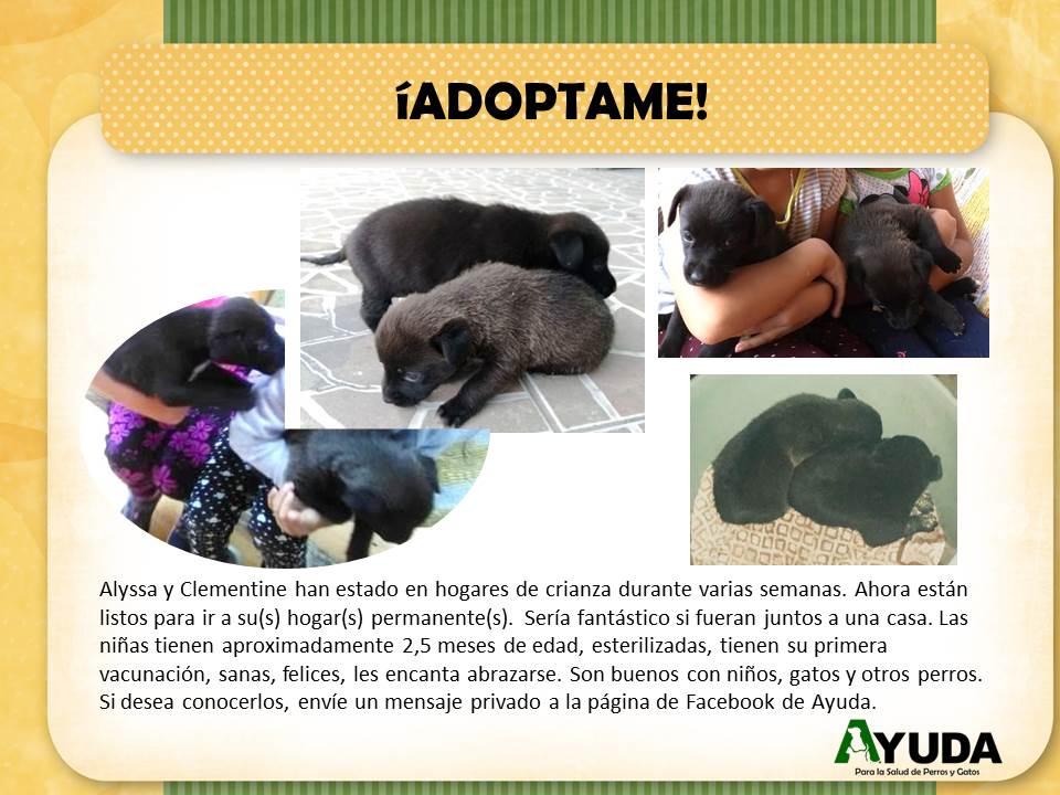 Ad.Adoption.AlyssaClementine.Oct2019