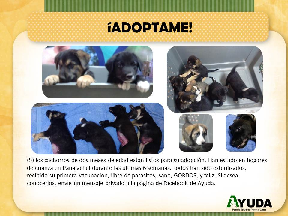 Ad.Adoption.DockLitter.Oct2019