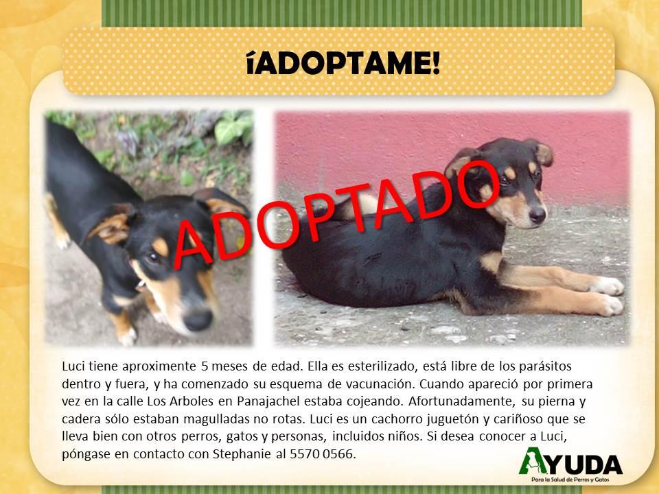Ad.Adoption.Luci.Sep2019