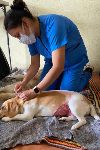 Dra. Kim applies a flea/tick treatment